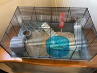 Free Hamster and cage and all accessories