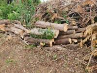Logs and branches