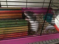 Male baby rats. A few female