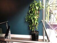 Large green plant (FREE)