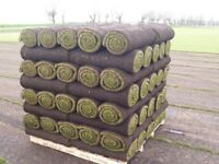 2 Pallets of brand new turf. Over ordered! be quick! delivered 2 days ago