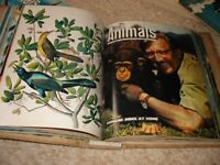 Animals Magazines 1963 in Official binders