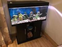 55 Gallon/225 Litre Fish Tank