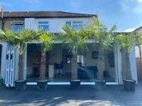 Price Reduced Further. Magnificent 8ft Trachycarpus Fortunei Palm trees lovely and established