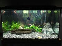 100 litre aquarium