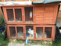 2 gorgeous male rabbits for sale