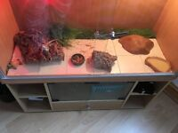 2 bearded dragons 1 male 1 female with set up
