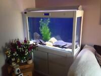 4ft Cleair Fish Tank complete set up