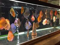 Few discus for sale