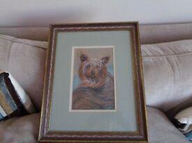 Original pastel painting by Renee Nash of Yorkshire Terrier