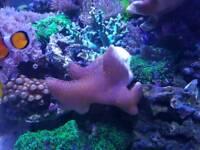 Various corals reef marine