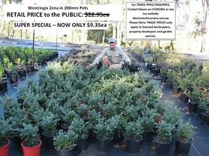 SUPER SPECIALS - YOU MUST SEE THESE! From $9.35ea  HS104 Tallai Gold Coast City Preview
