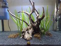 SuperFish 65L fish tank full setup