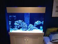 Full reef/marine aquarium set up