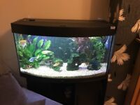Juwel vision 180 fish tank full setup