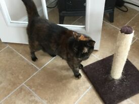 2 Female house cats for rehoming (free)