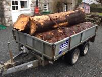Firewood wanted, will cut up and remove fallen trees