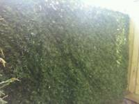 Evergreen artificial conifer hedge