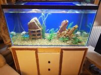 400L cold water fish tank for sale!