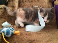 Kittens tabby ginger tortie