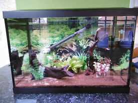 Aquarium - tropical tank with fish and accessories