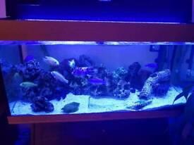 Jewel 3 foot aquarium - full set up