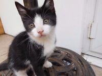 5 Kittens for Sale, Black & White