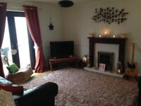 Beautiful hand-tufted rug