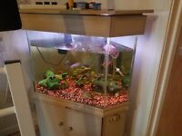 TROPICAL FISH TANK AND FISH