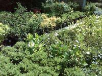 Huge range of plants and shrubs