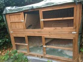 Hutch and Rabbit run XL
