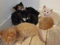 Kittens available for booking **update**