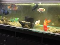 Tropical fishes & 2m Tank