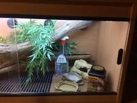 3ft Vivarium set up