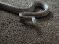 Beautiful grey female snake