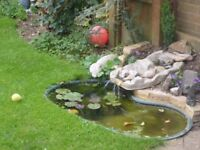 Small pond waterfall and pump.