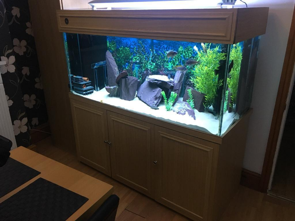 Large Fish Tank Marine Tropical