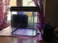 Large Fish Tank/ Aquarium