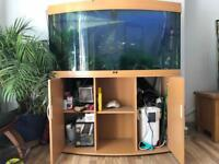 Jewel 260 Ltr tank with fish and tons of accessories, filter, bogwood 4ft