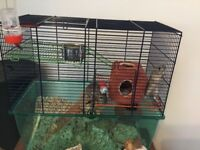 Twin gerbils looking for loving home