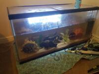 3 ft Fish Tank Full Set Up