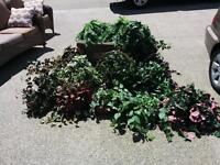 15 Silk Plants (Wish to sell as a Package - REDUCED)