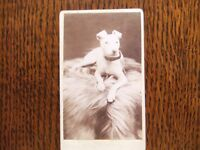 VICTORIAN CDV PHOTOGRAPH OF A TERRIER DOG LYING DOWN IS IN GOOD CONDITION £25