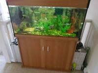 Fish tank + fish,ornaments