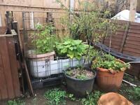 Aquaponic grow beds
