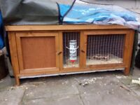Two female guinea pig's for sale with hutch and run