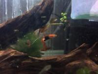 Tropical fish CHEAP!!!!!!!