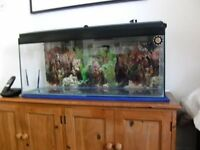 100 Litre Fish Tank with Free Extras Including 2 Pumps & Heater Unit