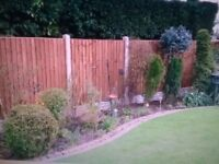 New tanerlized Heavy duty feather edge fence panels 6ftx6ft 24.00 each