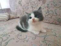 Kittens male/female